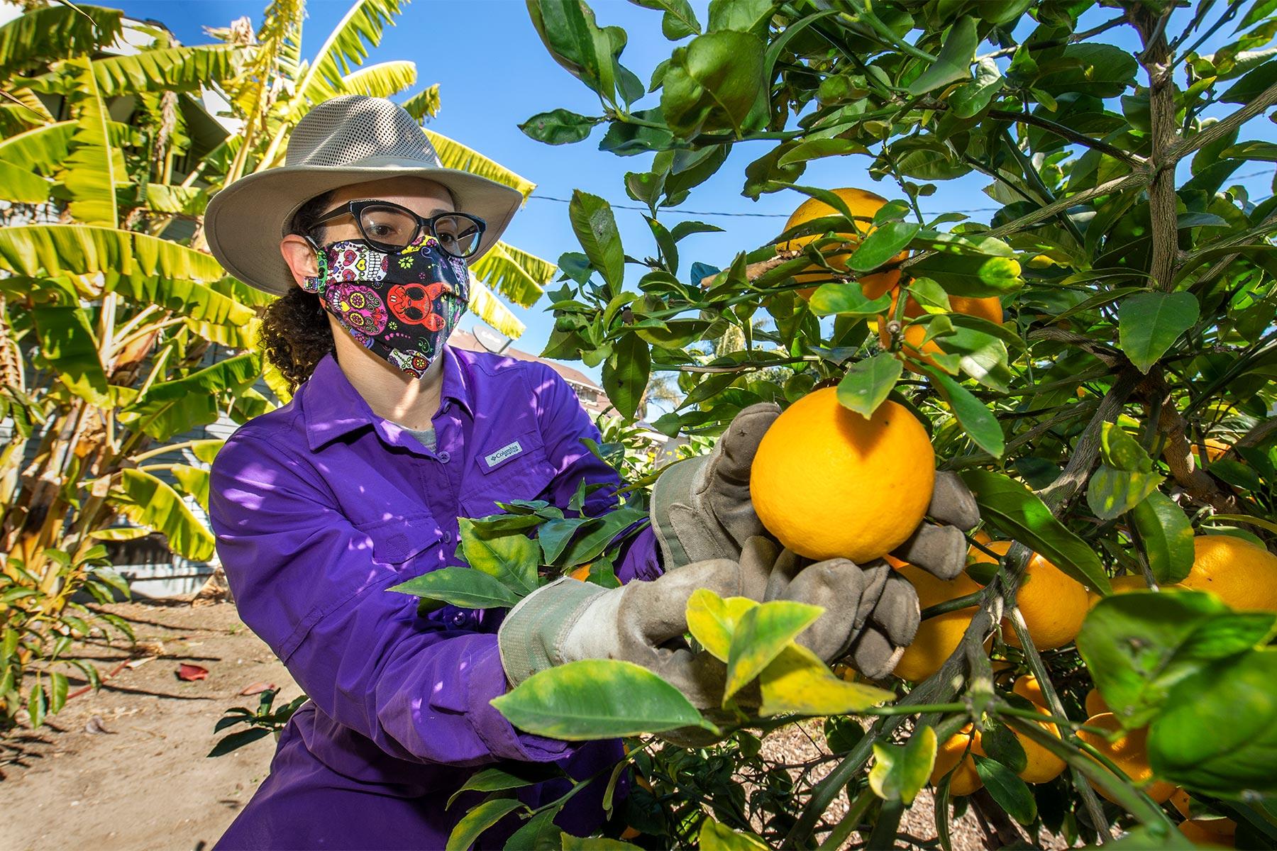 Garden Gateway South Los Ángeles Fruit