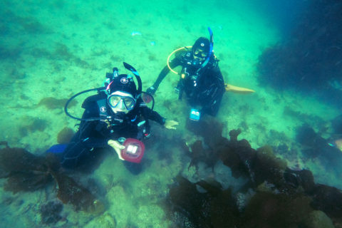 Erin Tharp and Vineet Bhandari diving