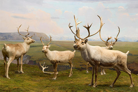 A screenshot of the virtual reality project showing four caribou standing in a grassy field with mountains and a stream in the background